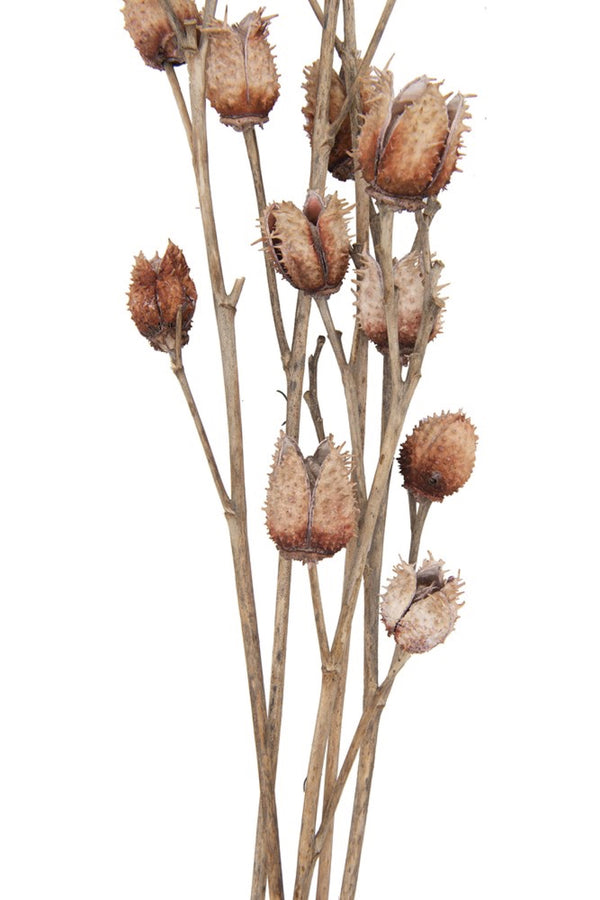 Dried Platycarya & Twig Bouquet