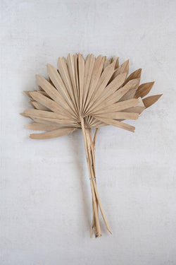 Dried Natural Palm Frond