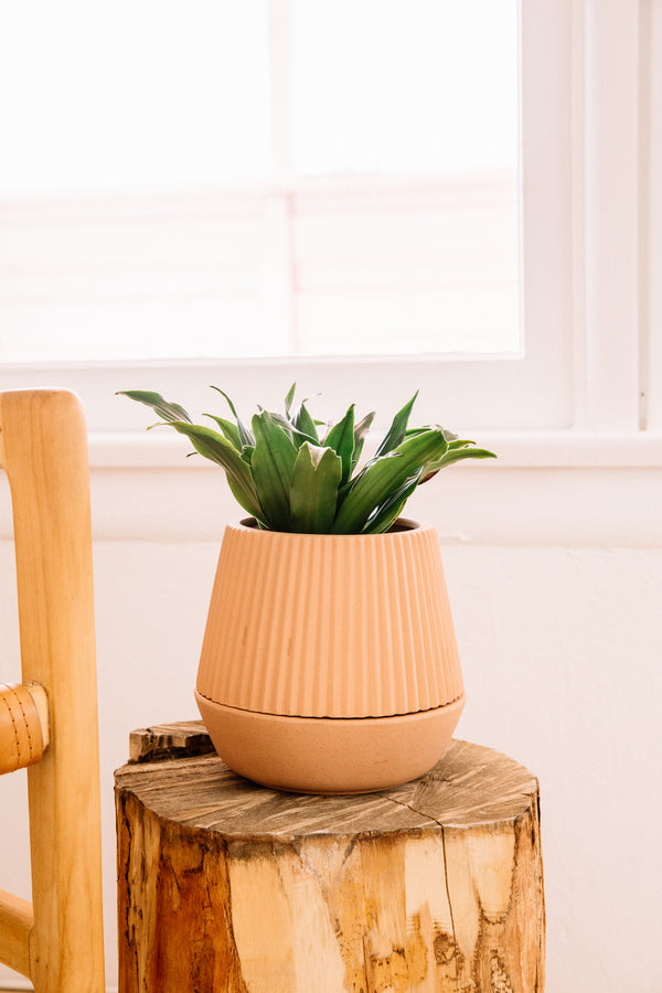 Terracotta Pleated Planter