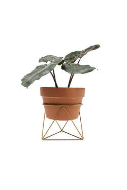 Gold Octahedron Ring Plant Stand