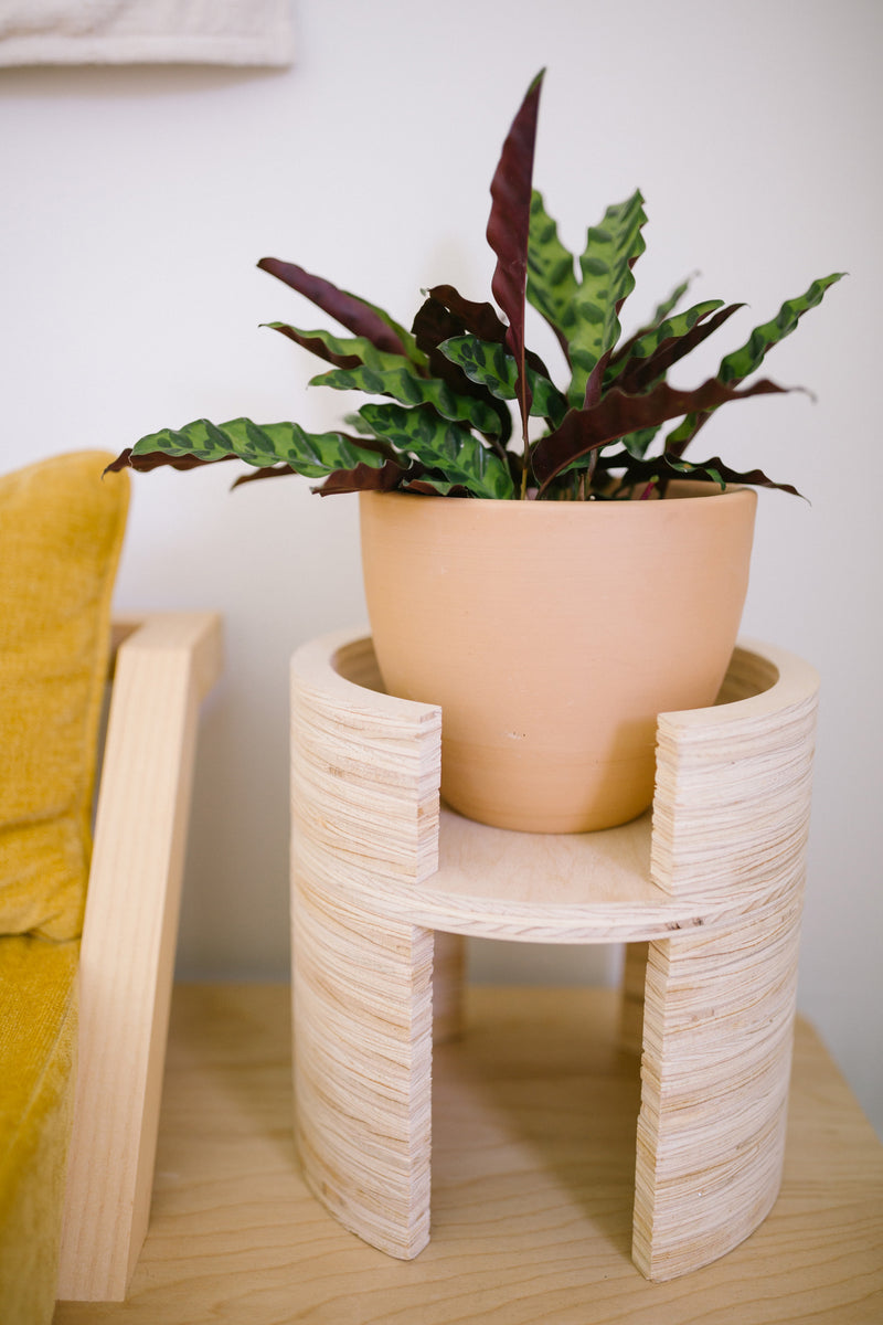 X PRISM Anza Plant Stand