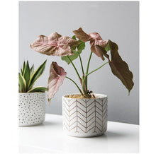 Load image into Gallery viewer, Abstract White Ceramic Planter