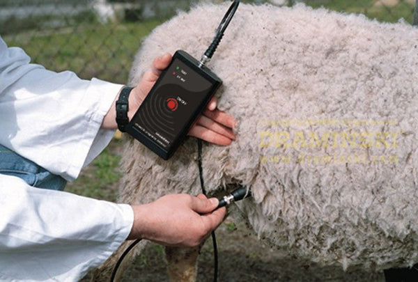 Pregnancy Detector for sheep and goats