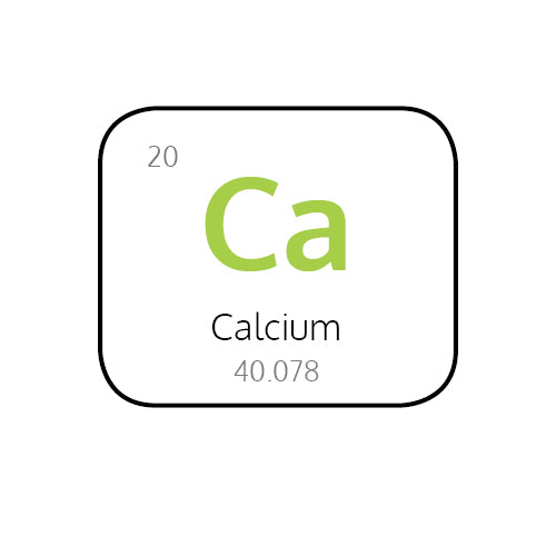 Why Is Calcium So Important in Your Body?