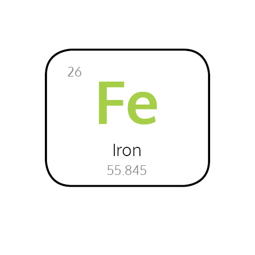 Why is Iron so Important for your Immune System?