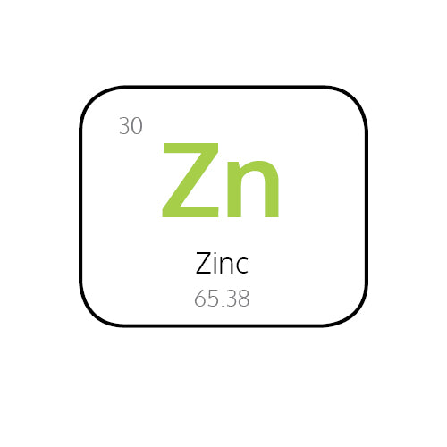 Why is Zinc So Important in your Immune System?
