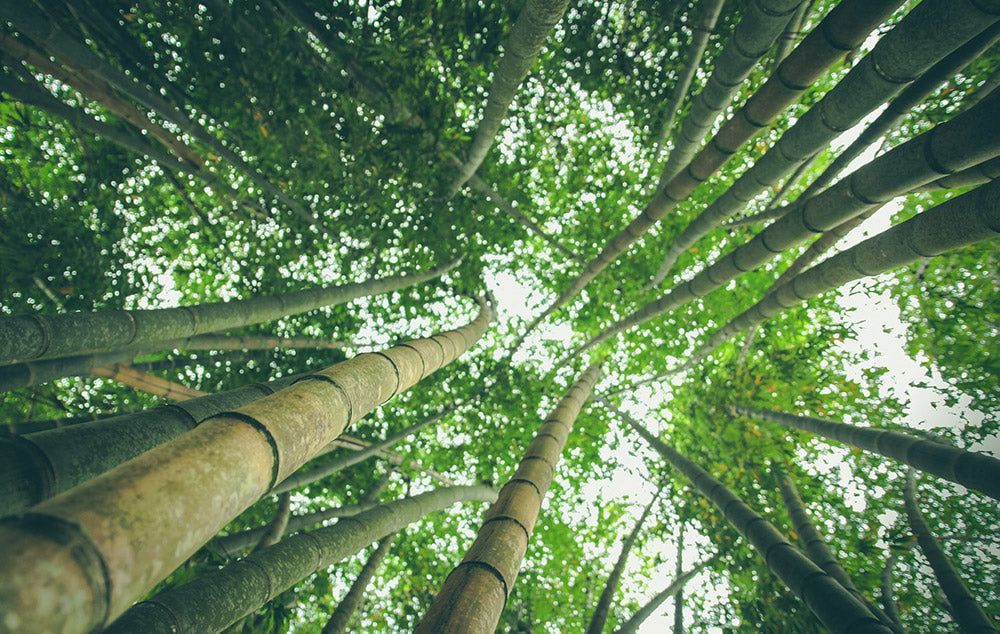 What Is A Resistant Material? Bamboo plants