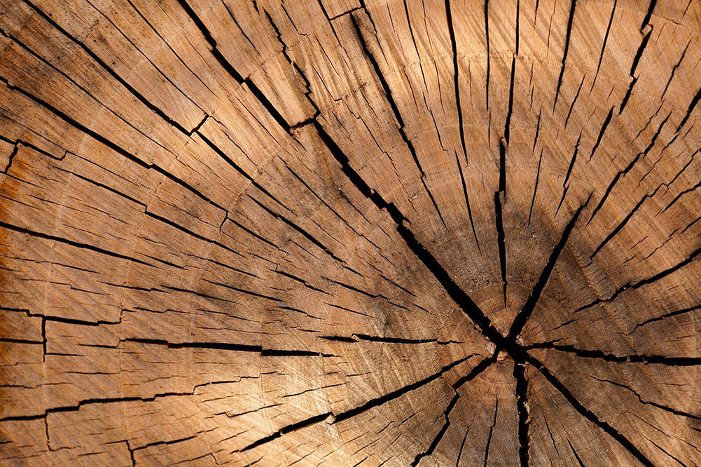 cross section of a tree to illustrate natural wood