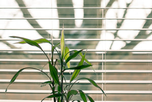 5 benefits to setting your blinds on a schedule