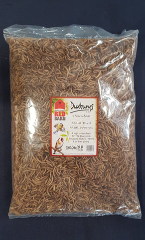 Wild Bird Meal Worms