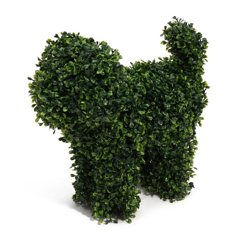 Boxwood Bella Dog