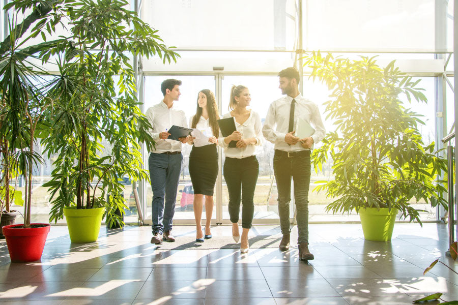 Young individuals walking in the office surrounded by plants. Plants help increase sustainability in the world place.