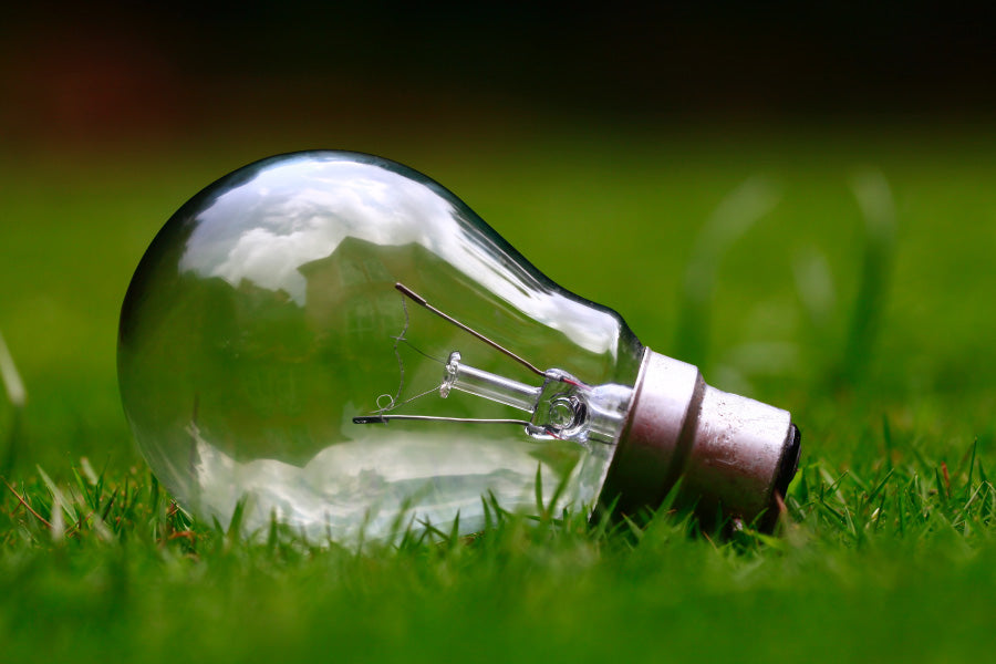 Lightbulb in Grass. Using low energy lights help with sustainability in the workplace.