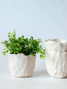 Hand-pinched torn edge white succulent planter with plant