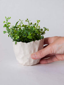 Hand holding hand-pinched torn edge white succulent planter with plant