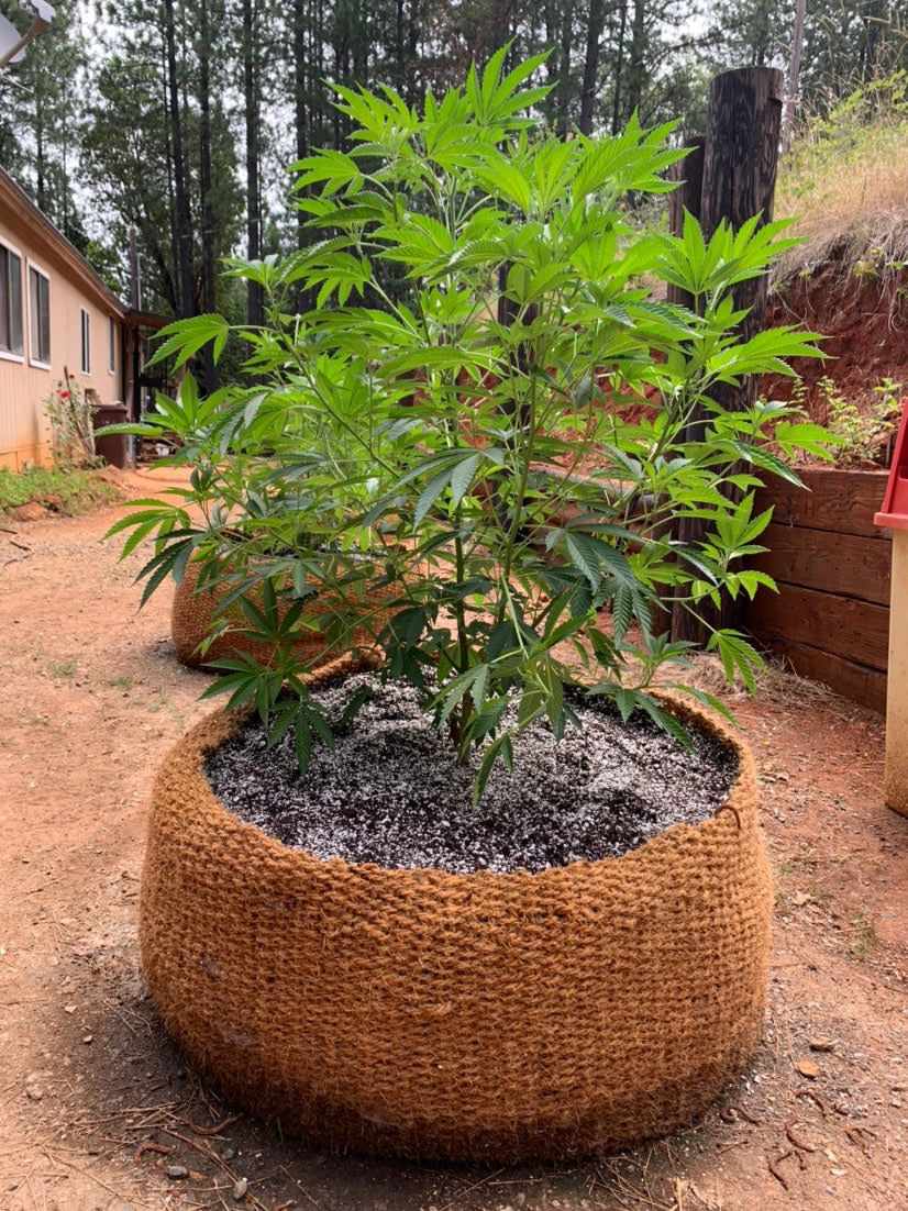 CoirNet  400 Gallon pot (5 Pot bundle)