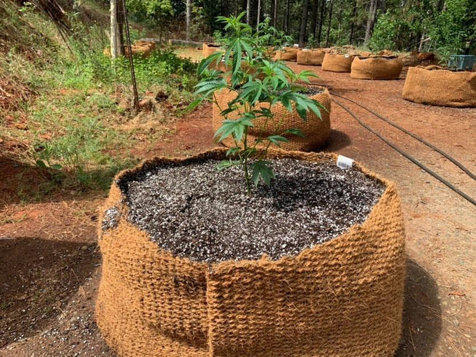 CoirNet - 65 Gallon coir pot