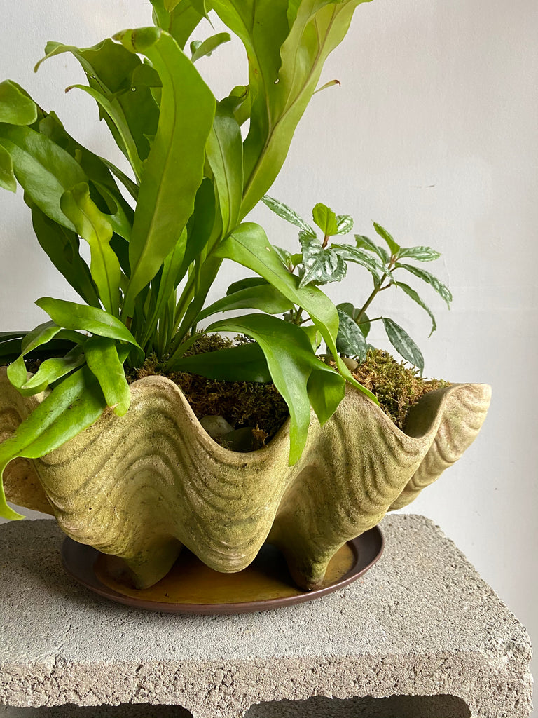 Aged Conch Shell Planter + Saucer