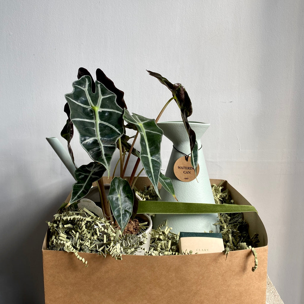 Plant Lover's Box