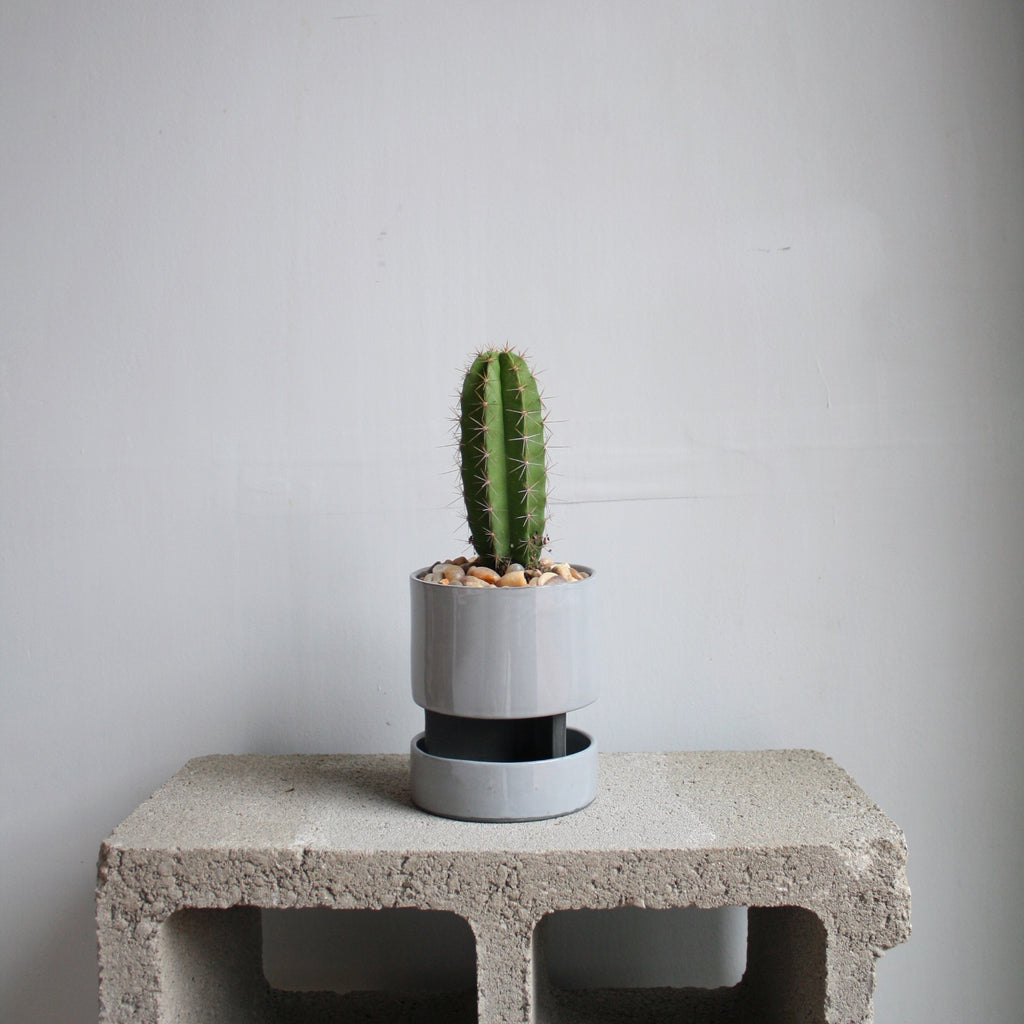 Archromo Ceramic Planter + Tray