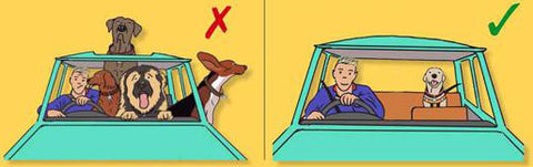 Dog Safety Car Seat Recommendation