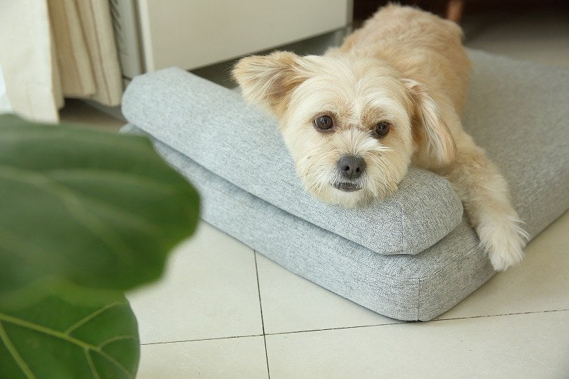 Snoozify Memory Foam Dog Bed