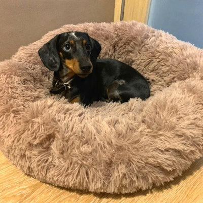 PetCrafty™ Calming Dog Bed