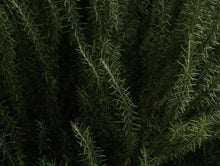 Load image into Gallery viewer, Dried Rosemary 20g