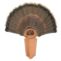 Turkey Kit - Matuska Taxidermy