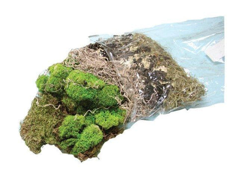 Moss Assortment with Black Lichen - Matuska Taxidermy