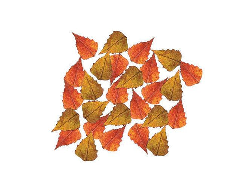 Bag 'O' Birch Leaves - Matuska Taxidermy