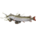 Artificial Driftwood • Large - Matuska Taxidermy