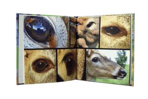 'All Around' Reference Book (8x8) - Matuska Taxidermy