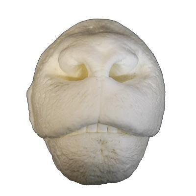 Nose Reference Casts - Matuska Taxidermy
