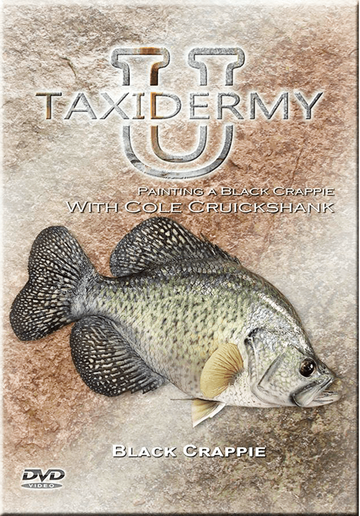 Painting a Black Crappie w/ Cole Cruickshank by Taxidermy University - Matuska Taxidermy