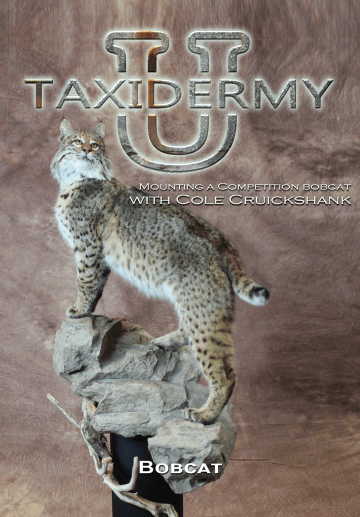 Mounting a Competition Bobcat w/ Cole Cruickshank by Taxidermy University - Matuska Taxidermy