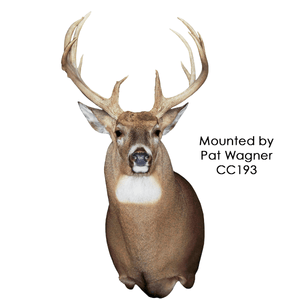 Competitors' Choice Semi Upright Series - Matuska Taxidermy
