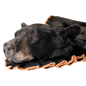 Black Bear Rug Shell - Closed Mouth - Matuska Taxidermy
