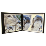 Deer Nose Reference Book - Large - Matuska Taxidermy
