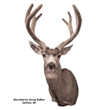 Mule Deer - Early Season (Relaxed Upright) - Matuska Taxidermy