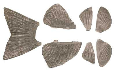 Artificial Fish Fin Sets
