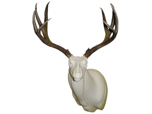 Trademark Mule Deer | Semi-Sneak - Matuska Taxidermy