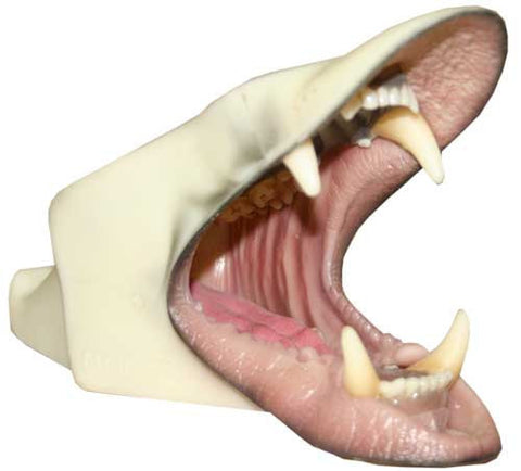 Mouth Cup - Bear, Black - Matuska Taxidermy