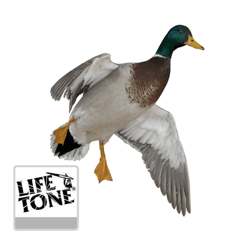 Bird Kit - Lifetone Lacquer - Matuska Taxidermy