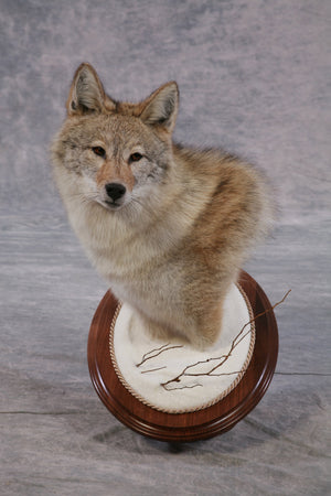 Single Tier Base - Round - Matuska Taxidermy