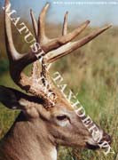 Whitetail Reference Photos 8x10 Enlargements - Matuska Taxidermy