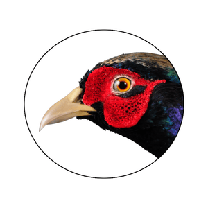 Pheasant Wattle Red • Flocking - Matuska Taxidermy