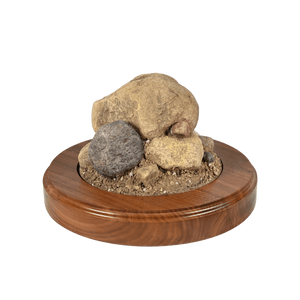 Rock Base - Medium Round - Matuska Taxidermy