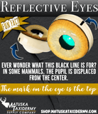 Reflective Eyes - Bear - Matuska Taxidermy