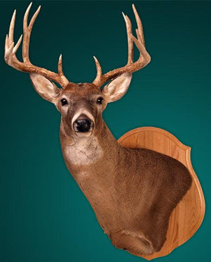 Classic Panels - Matuska Taxidermy
